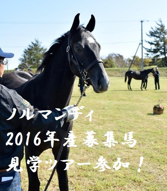 ノルマンディ2016年産募集馬見学ツアーに参加しました!