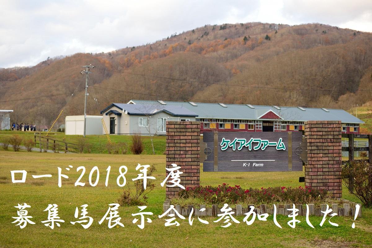 ロード2018年度(17年産)募集馬展示会に参加してきました!(2018/11/17)